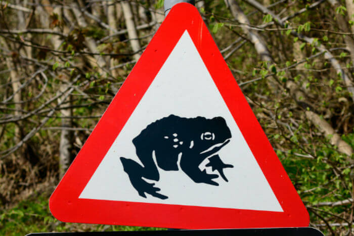 Animals on the road warning sign