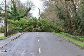 A fallen tree lying across a road