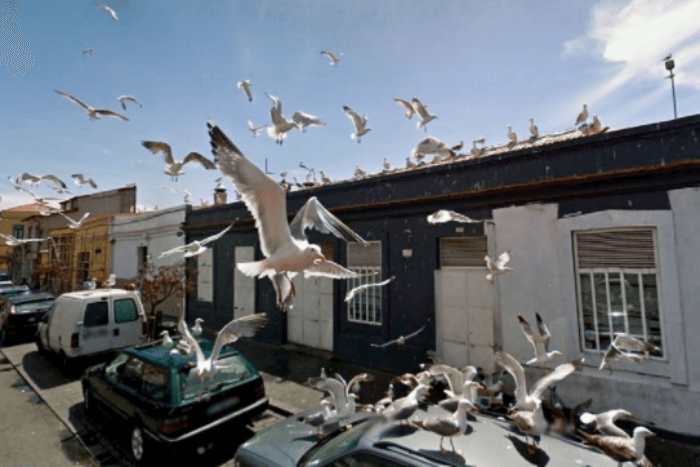 group of birds on google street view