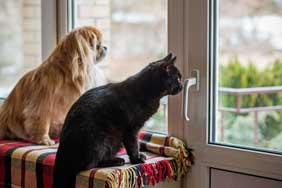 A cat and a dog looking out of the window