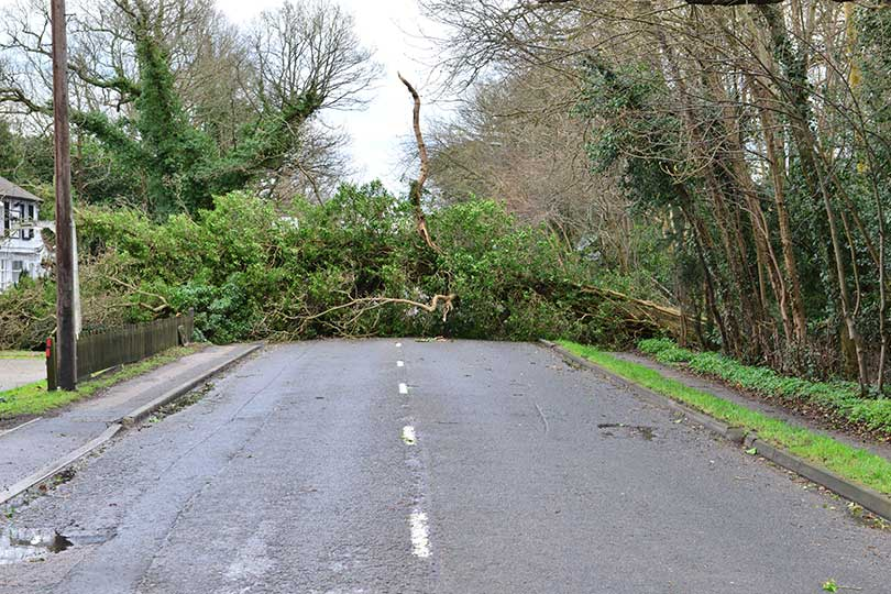 A tree fallen in the road due to heavy winds