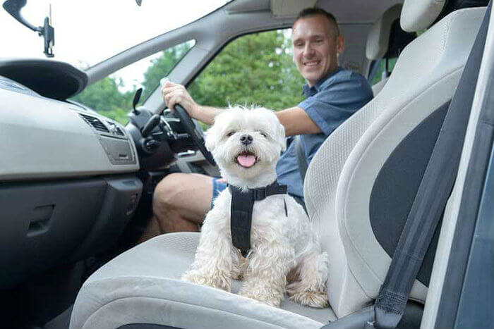 Keeping your dog safe in the car