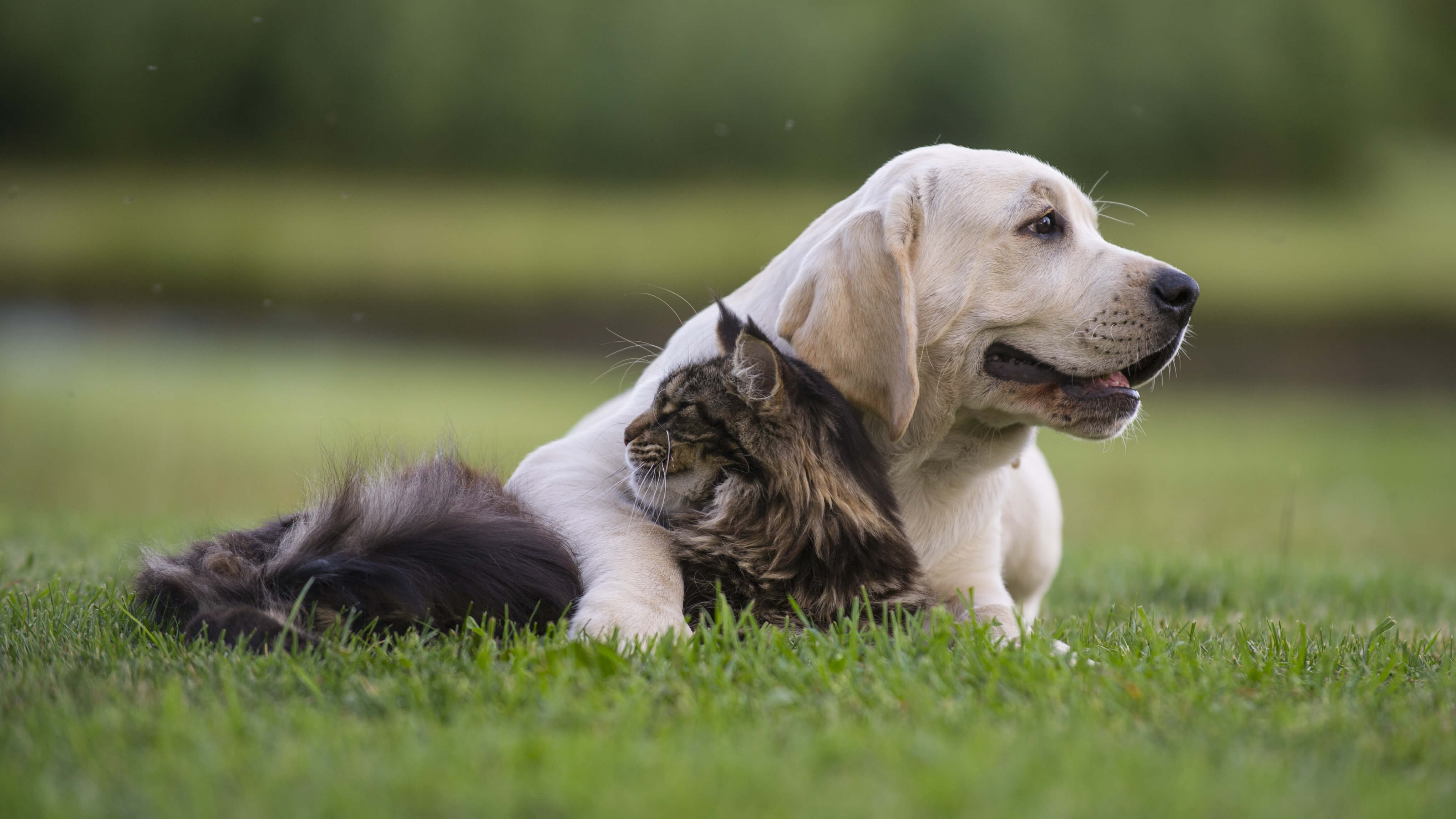 A dog and cat hugging each other while lying in the grass
