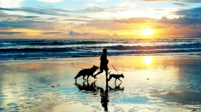 Man on beach running with dogs
