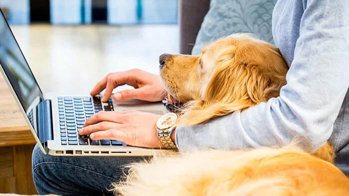 Person working from home with a laptop and a dog
